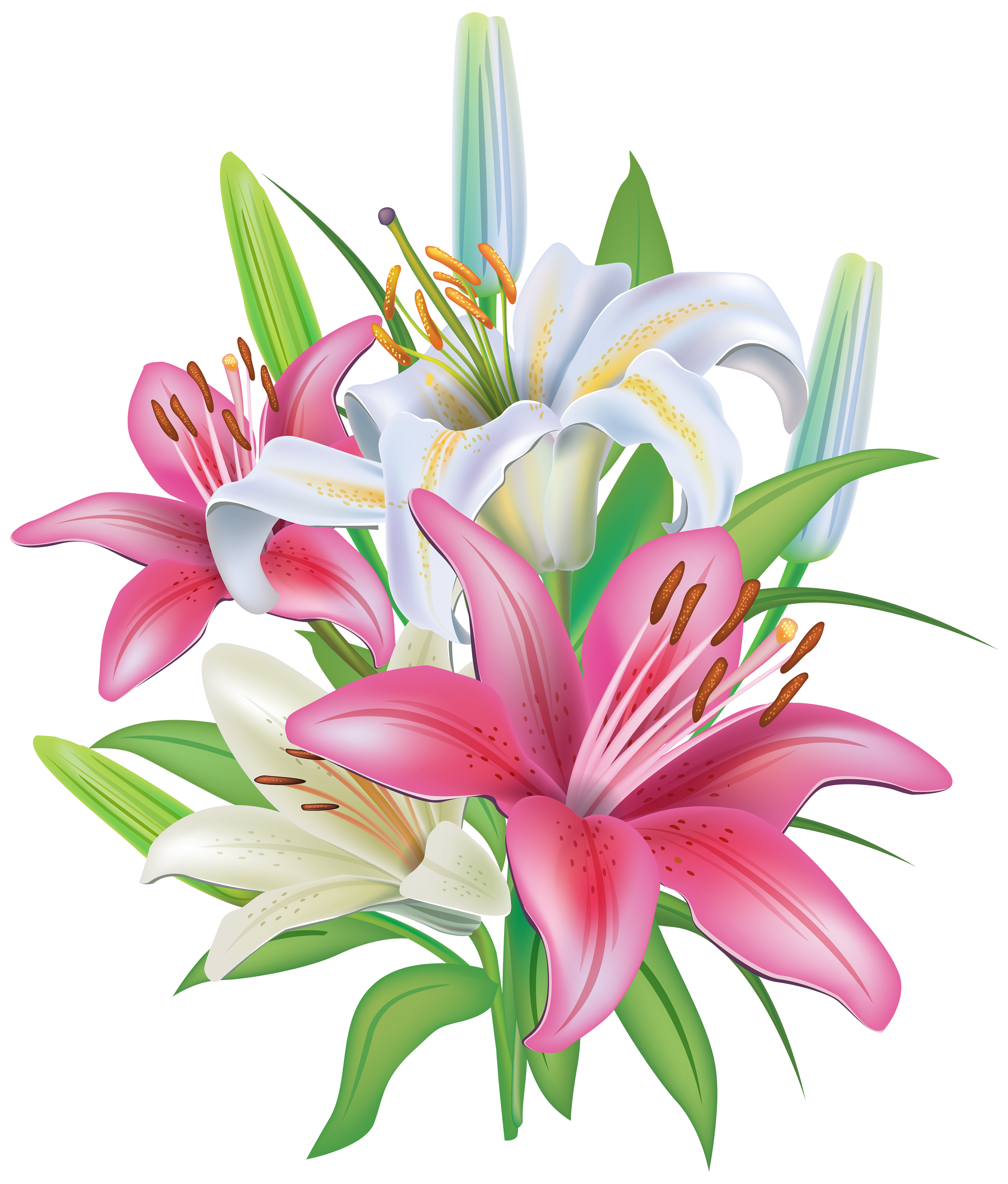 Pink Lilies Clipart 6