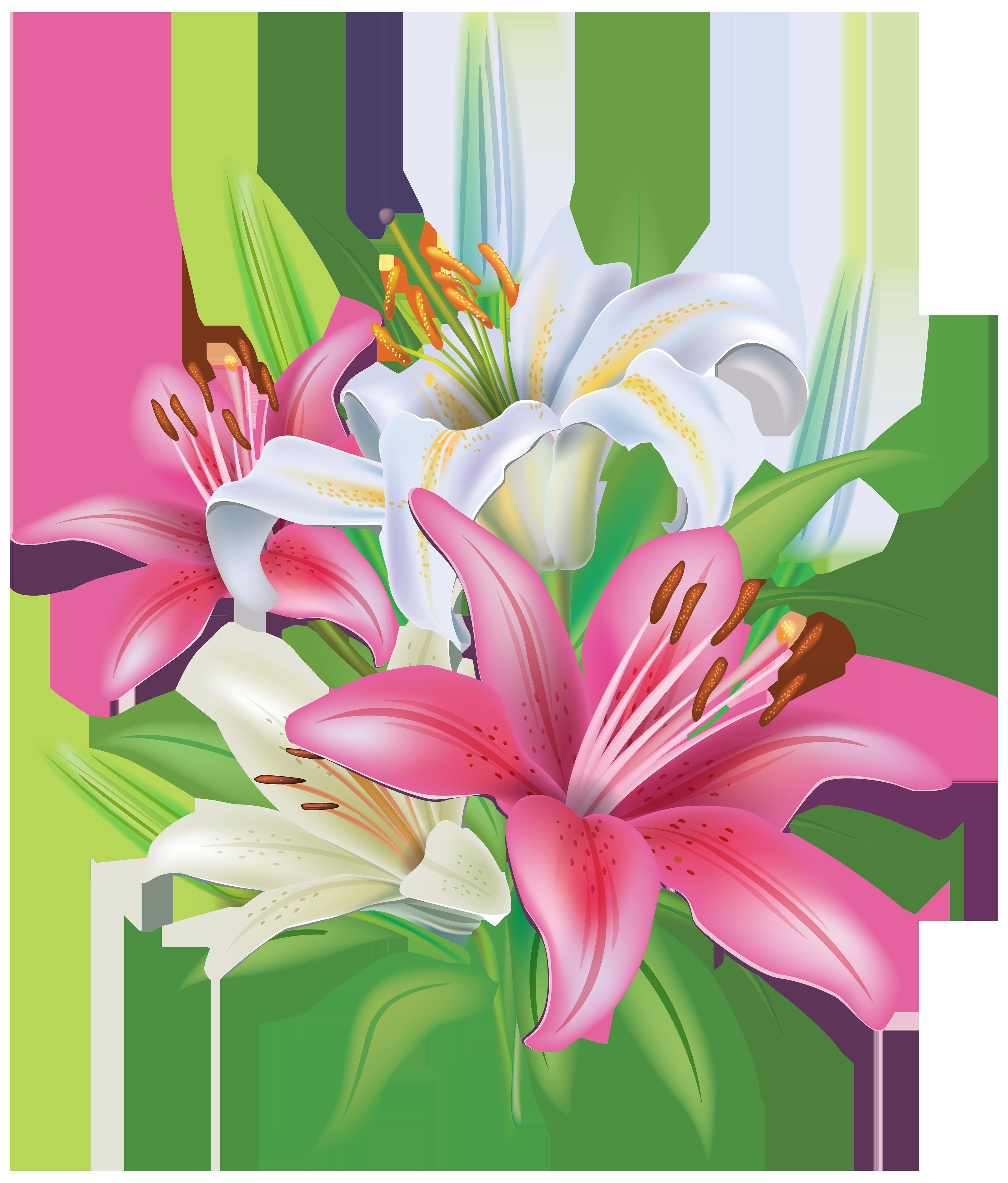 Pink lilies clipart 6 Flores
