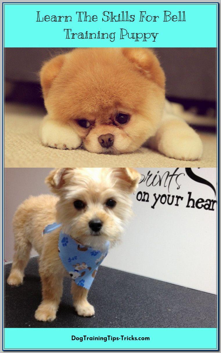 Pin On Puppy Training