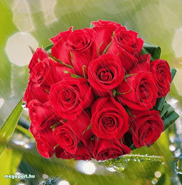 Red rose bouquet (animated) Beautiful Flowers Pinterest Red