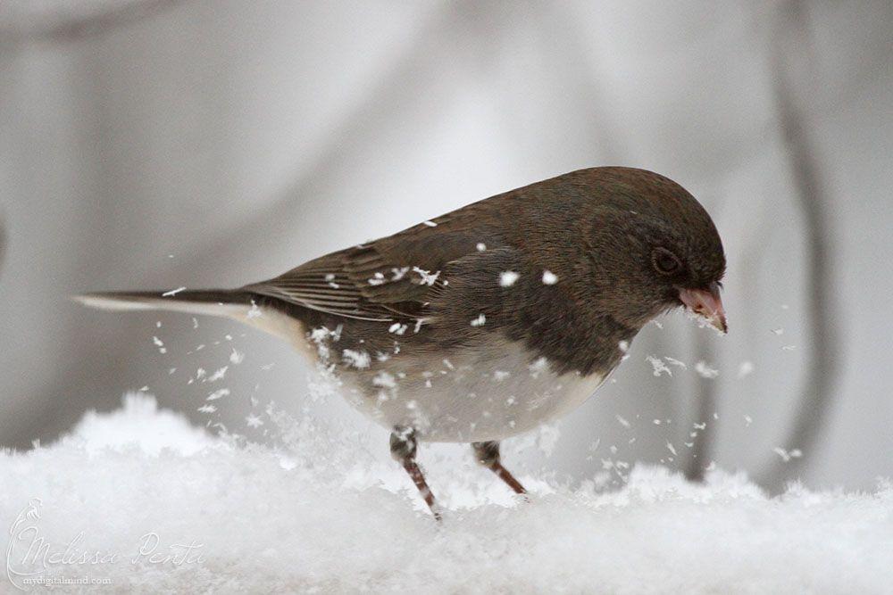 snow bird by mydigitalmind deviantart com on deviantart