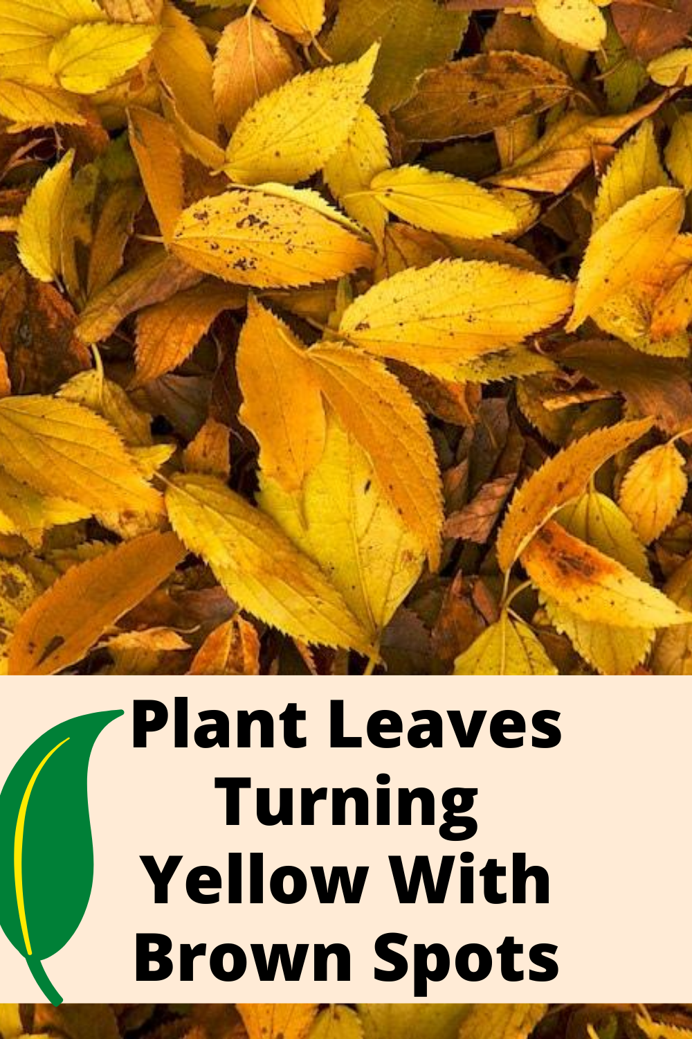 Plant Leaves Turning Yellow With Brown Spots Plant Leaves Turning Plant Leaves Turning Yellow Plant Leaves