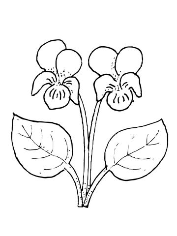 Violet Flower Coloring Page Leaf Drawing