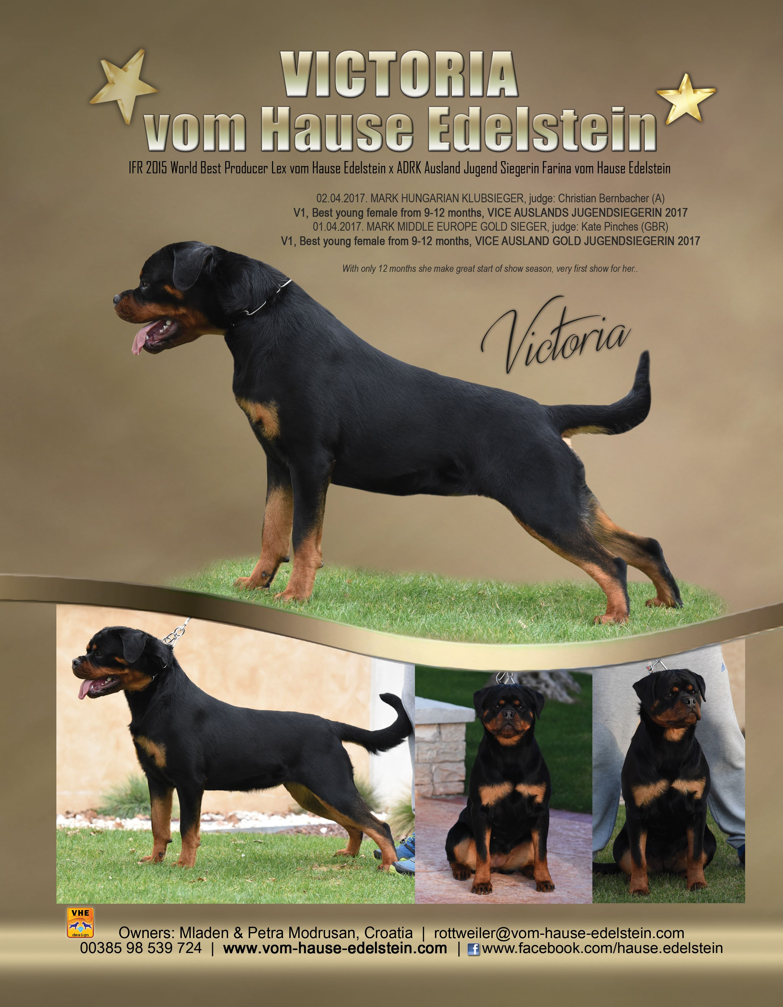 Pin By Kathy Crigler On Rotts Rottweiler Article Writing Vets