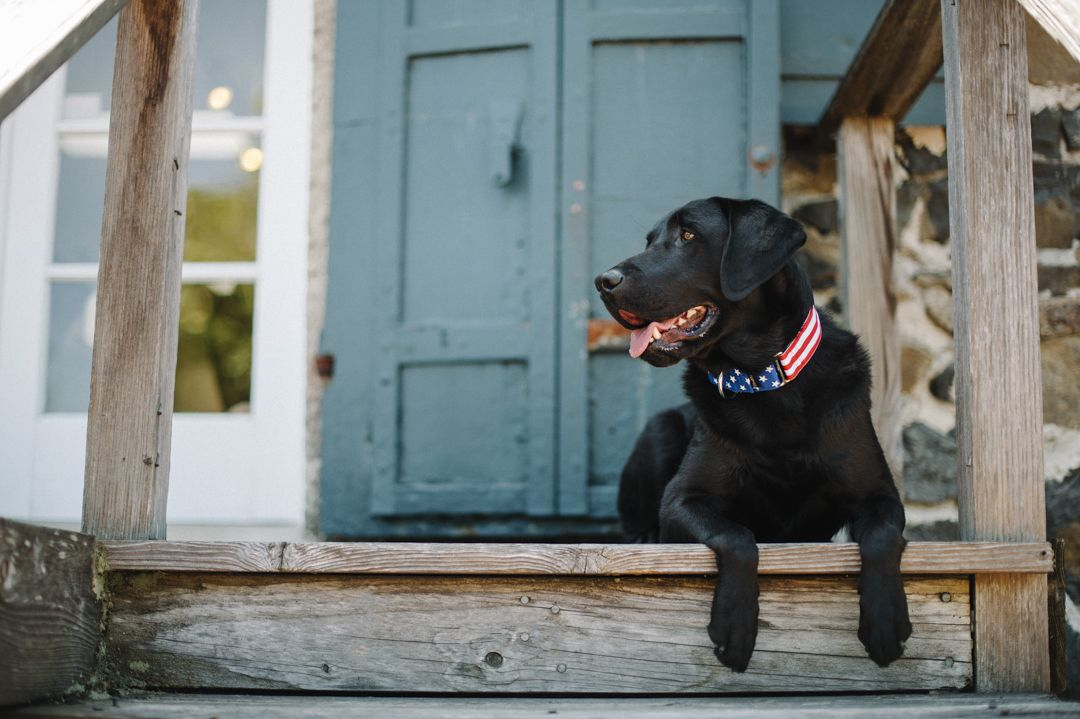 How to keep your dog calm during fireworks and storms 2
