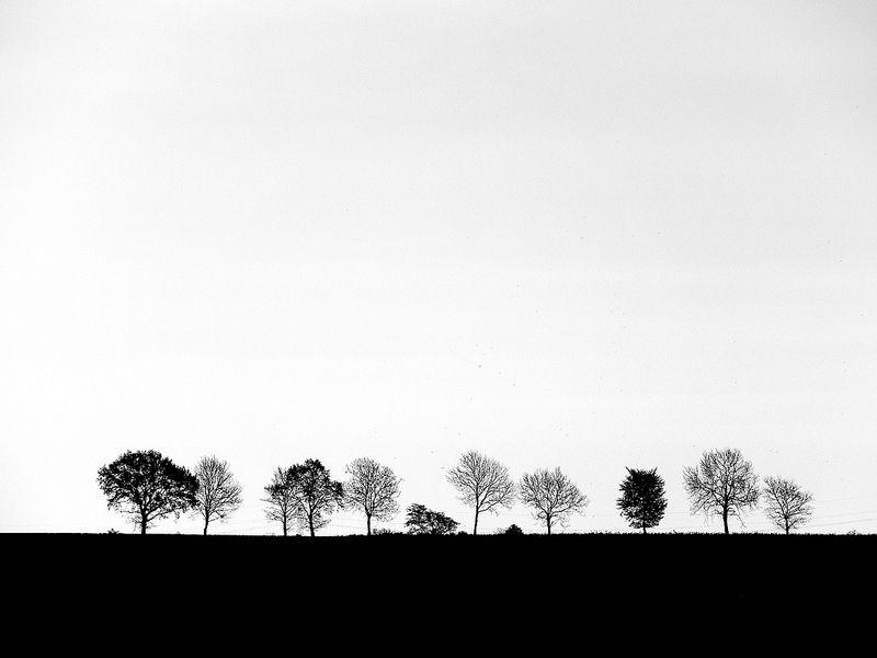 Reduced landscape