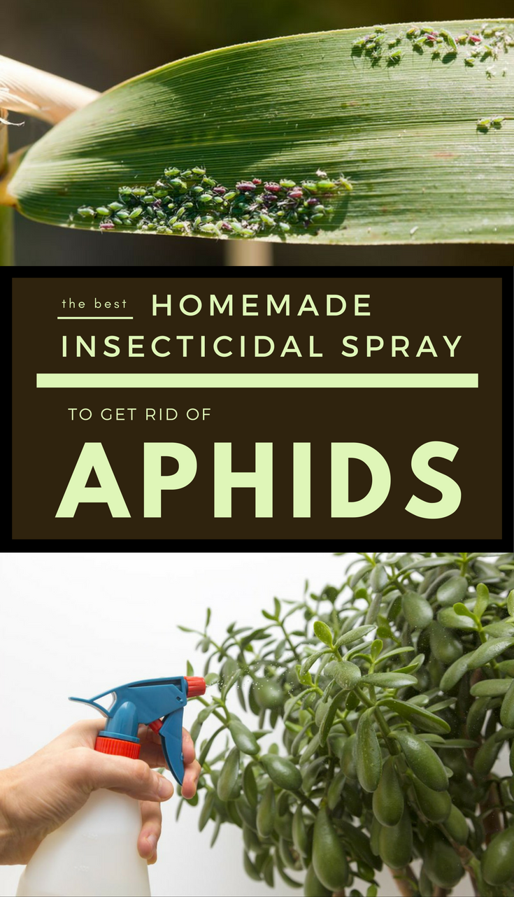 It will also deter the ants, stopping them to come back in potted ...