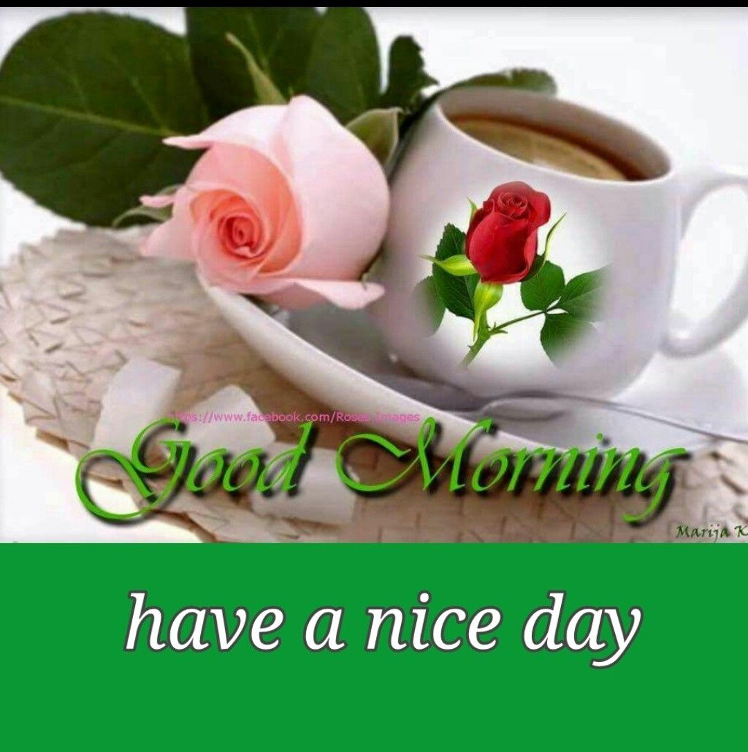 Good Morning Morning Good Morning Greetings Good Morning Good