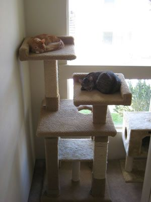 Customer trees cat tree plans how to build cat for Do it yourself cat tower