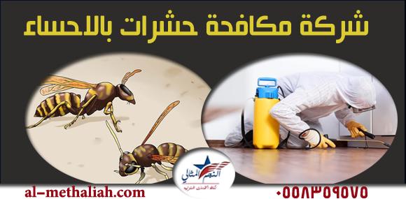 شركة مكافحة حشرات بالاحساء من أفضل وأكبر شركات مكافحة الحشرات على الاطلاق تعمل على مكافحة كافة أنواع الحشرات باستخدام اقوى المبيدات الحشرية الأمن Insect Control