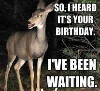 Deer Meme Yahoo Image Search Results Happy Birthday For Him Birthday For Him Deer Meme