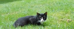 Blog post about my search for the missing Boccelli and how to find a lost cat.