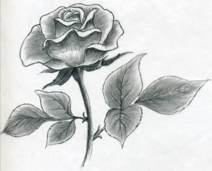 Image result for draw rose · rose drawingseasy pencil