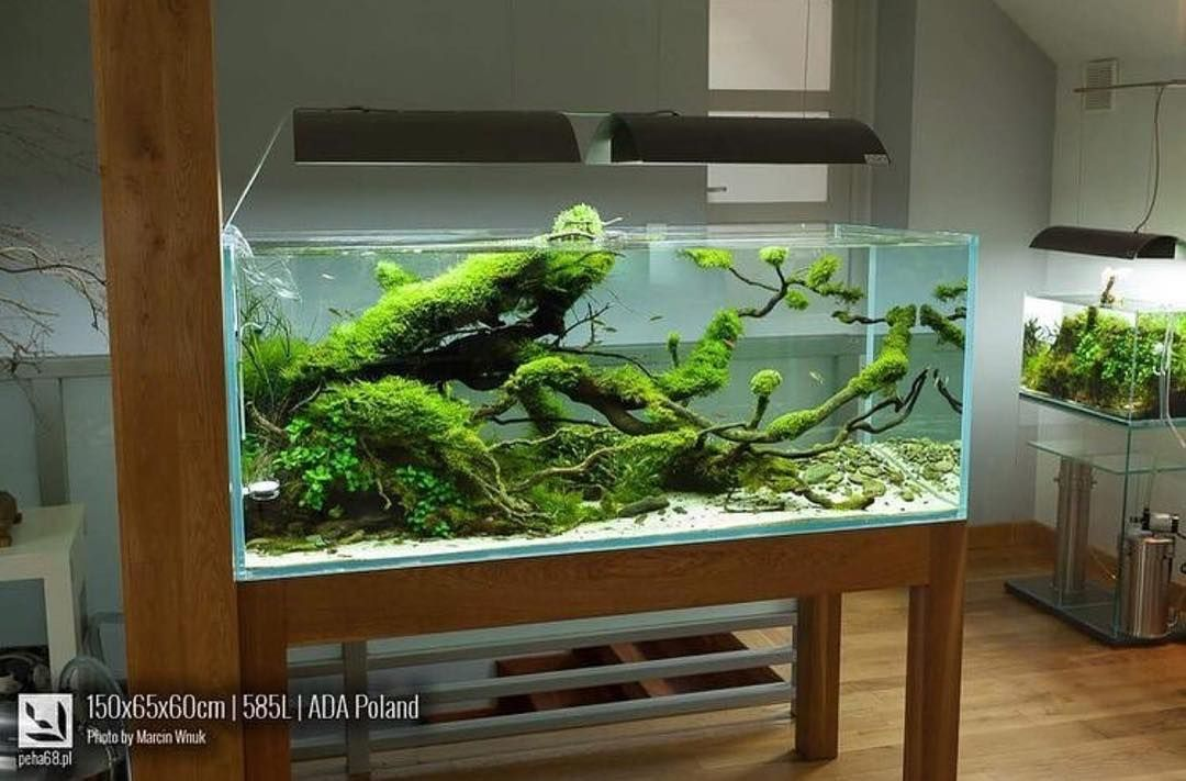 one word to describe this scape by adam paszczela aquarios s wasseraquarium aquarien und