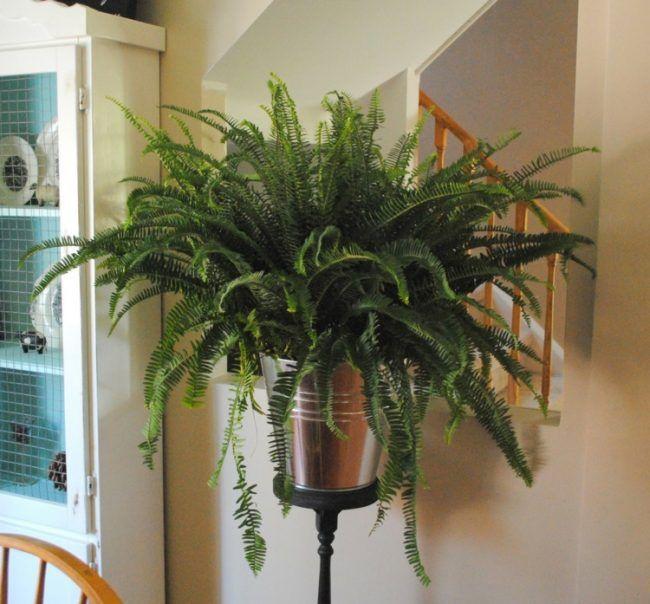 Zimmerpflanze Wenig Licht zimmerpflanzen wenig licht farne deko idee feuchtigkeit flur