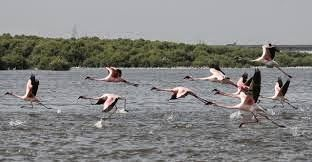 Information: Every year thousands of birds migrate from their n...