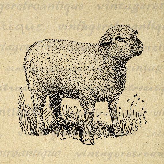 Little Hampshire Sheep Graphic Image Download Cute Lamb Printable Digital Vintage Clip Art Jpg Png Eps Clip Art Vintage Sheep Illustration Antique Illustration
