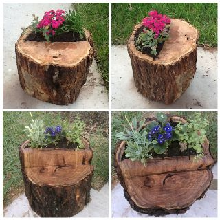 My New Tree Stump Flower Pots Tables Filled With