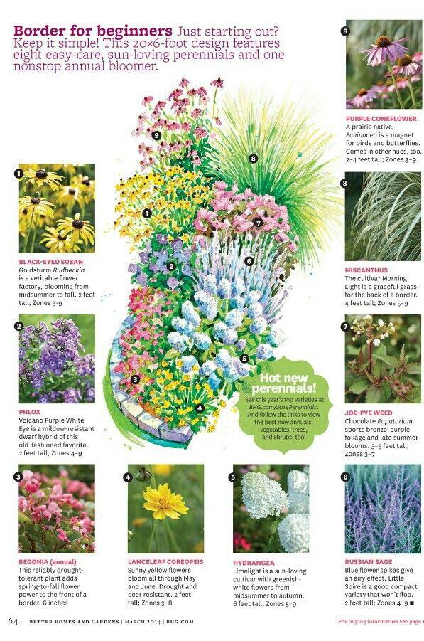 Border For Beginners Flower Garden Plans Garden Planning Easy Perennials