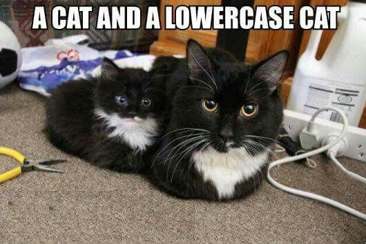 Copy And Paste Cute Animals Mama Cat Cats
