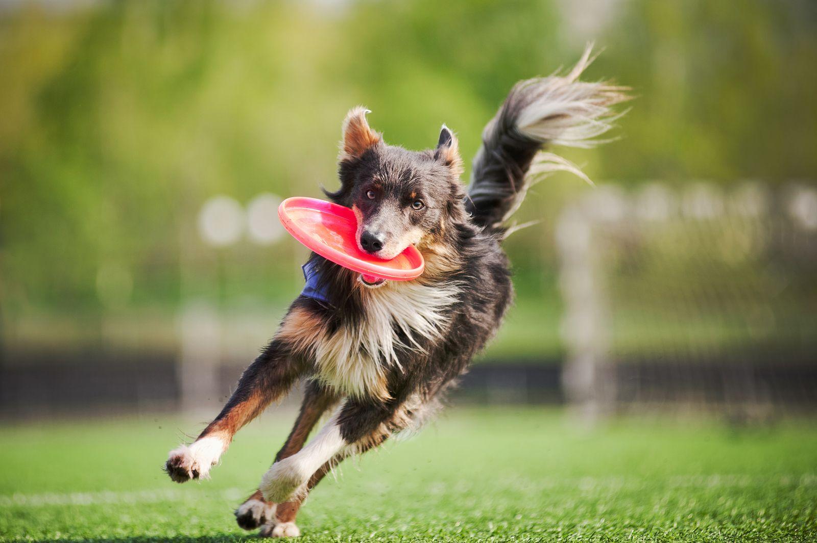 Dog Skin Allergy Knee Acl Injury Heal Naturally Dog Hacks