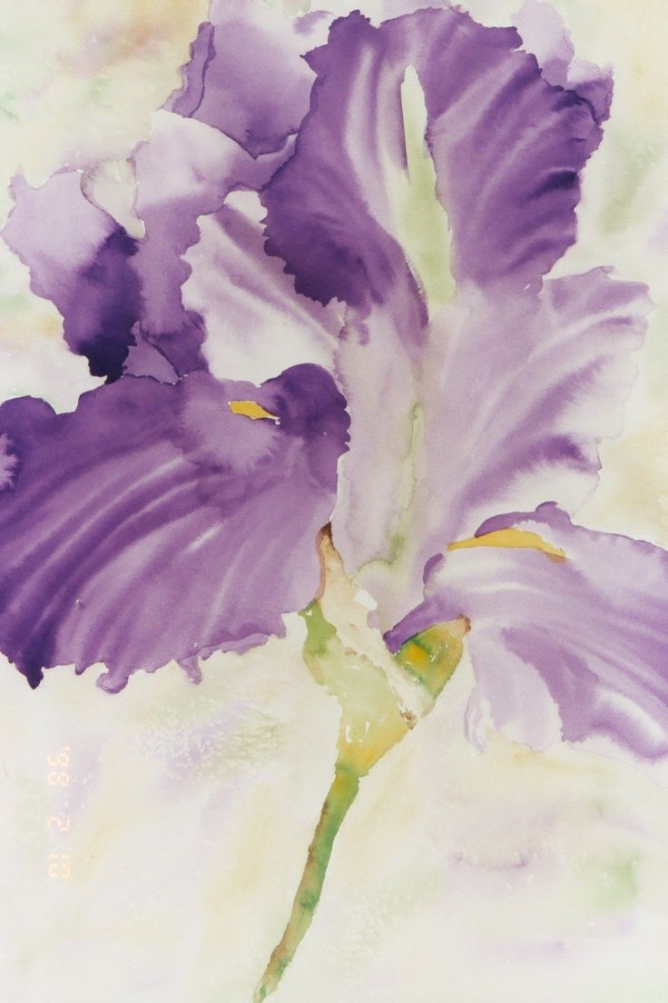 Iris flower tattoo watercolor high quality mobile wallpaper iris flower tattoo watercolor high quality mobile wallpaper wallpaper and images izmirmasajfo Images