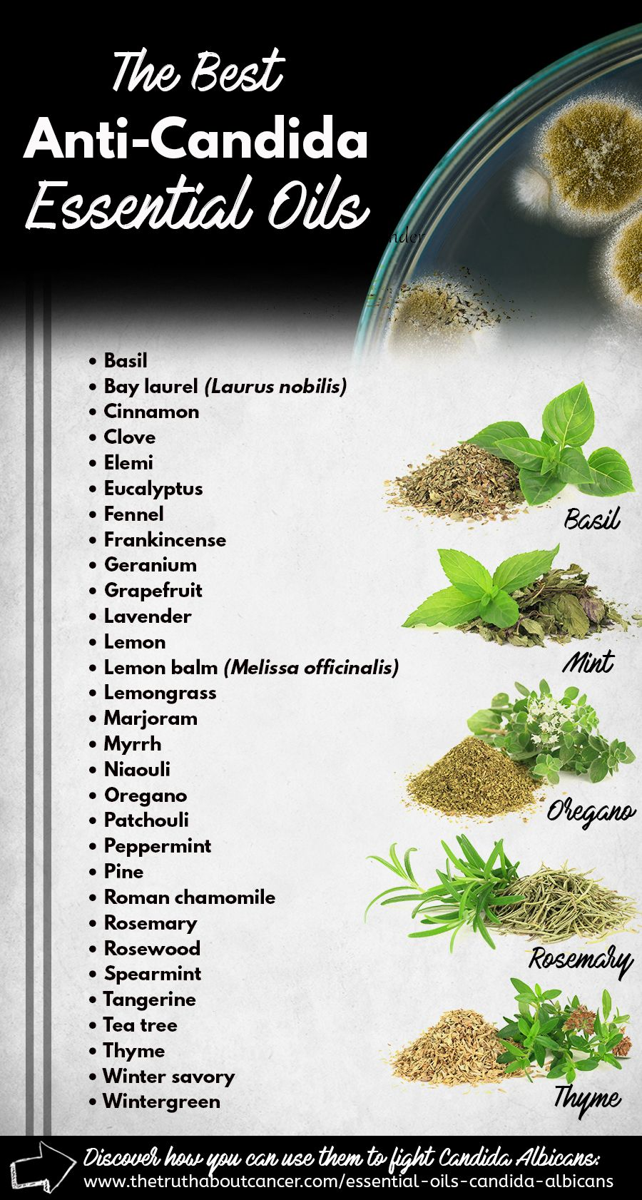 Essential Oils For Animals Essential Oils For Candida Essential