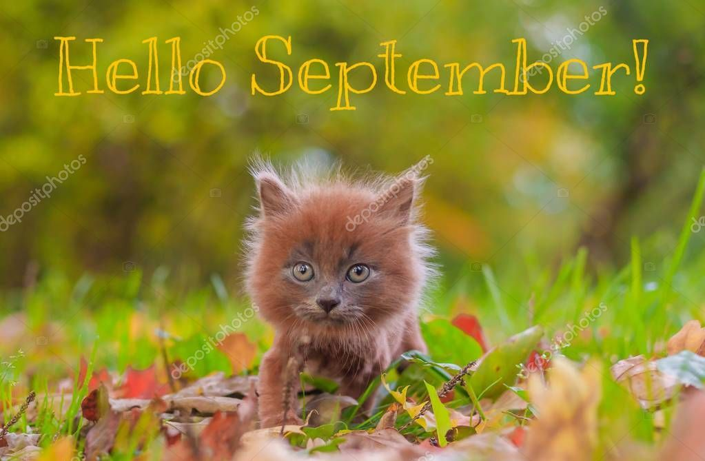 Hello September banner. New month. Greeting card. Golden autumn. The text in the , #affiliate, #month, #Greeting, #September, #banner #AD #helloseptember