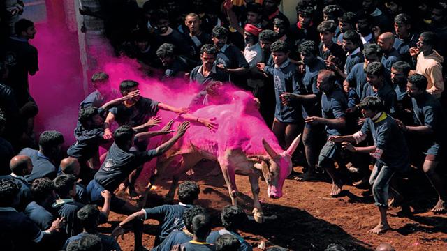 AlanganallurJallikattu Festival, India 15 of the World