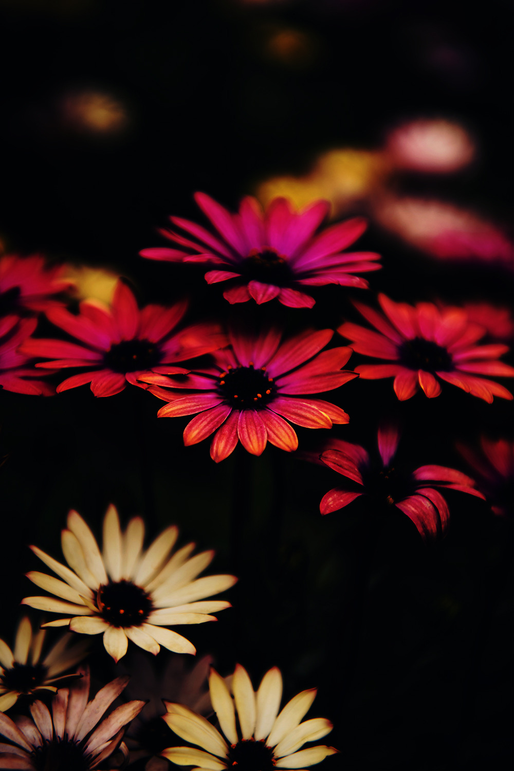 Beautiful Flowers Images Hd Free Download Iphone Wallpapers In 2020 Beautiful Flowers Hd Wallpapers Beautiful Flowers Images Hd Beautiful Flowers Wallpapers