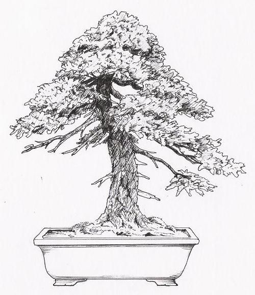 bonsai moyogi