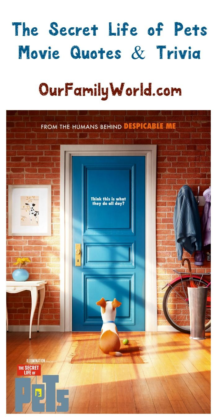 Watch The Secret Life of Pets Online | Stream Full Movie ...