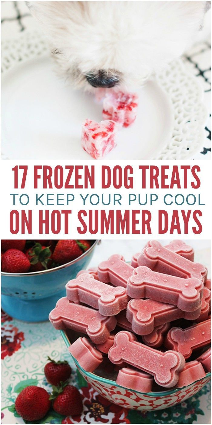 17 Frozen Dog Treats to Keep Your Pup Cool This Summer