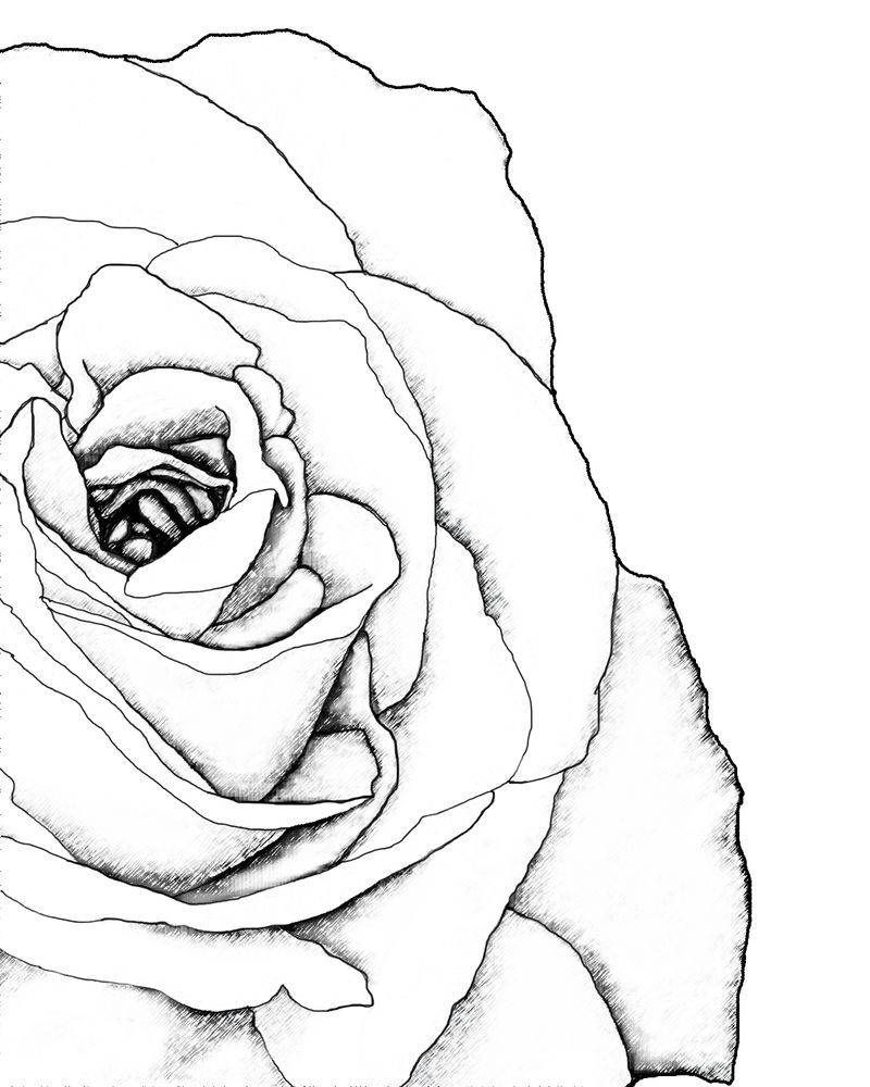 Drawn Rose Corner Roses Drawing Pictures To Draw Art