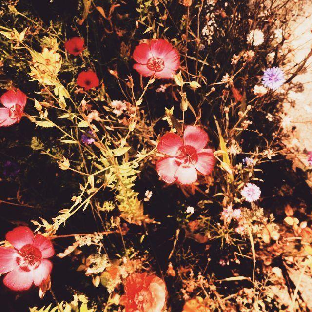 Reasons I love summer 🌸 #sun #summer #flowers #garden #colourful #flower #beautiful