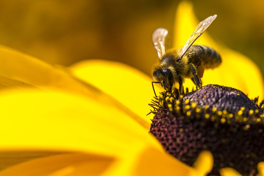Source A United States appeals court ruled on Thursday that federal regulators erred in allowing an insecticide developed by Dow AgroSciences onto the market, canceling its approval and giving environmentalists a major victory. The ruling by the United States Court of Appeals for the Ninth Circuit, in San Francisco, is significant for commercial beekeepers and …
