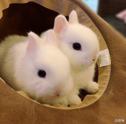 56 Twitter うさぎ 赤ちゃん ミニウサギ かわいい動物の赤ちゃん