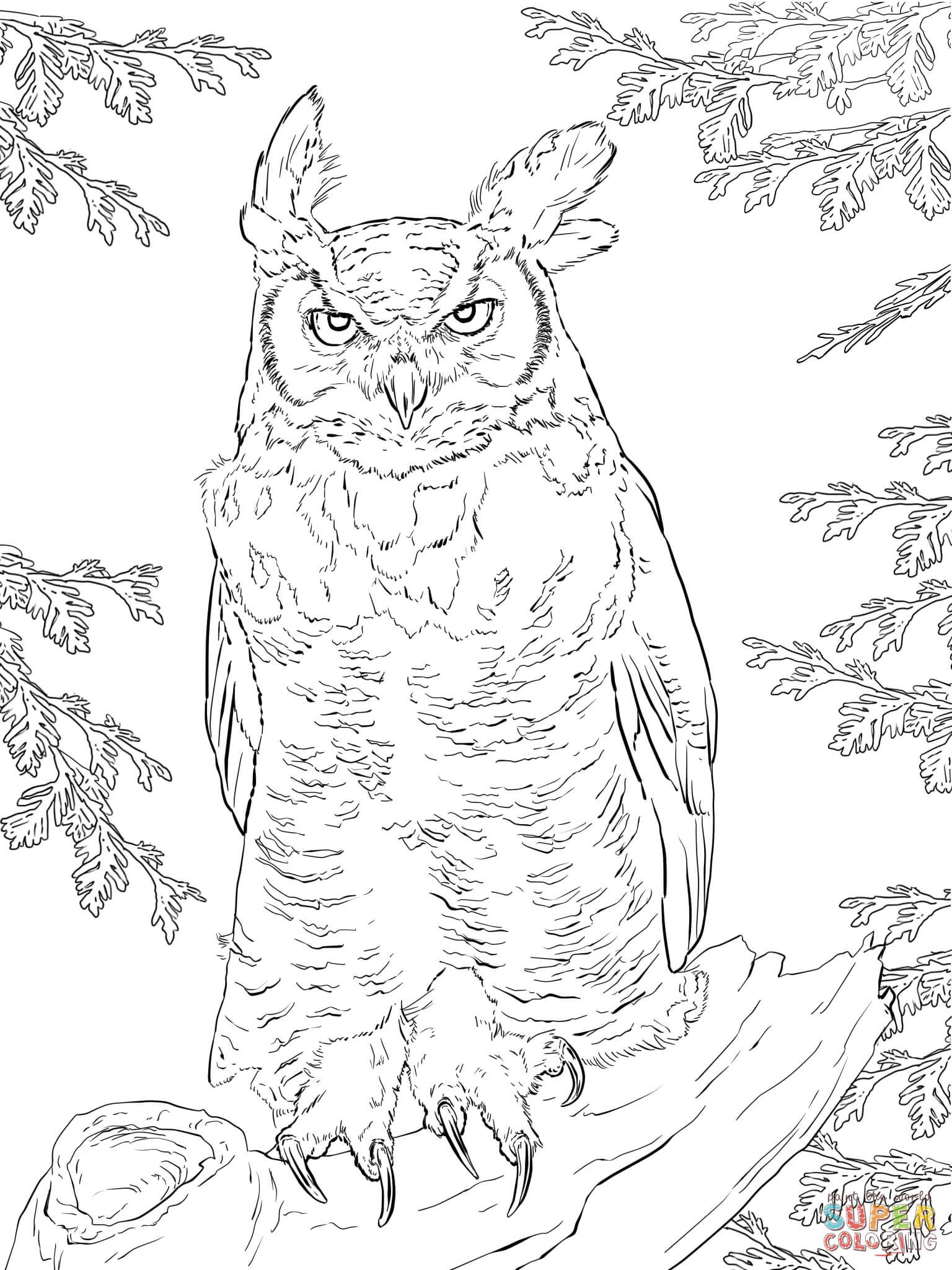 Pin by Małgorzata Kitka on Coloring pages - Owls | Pinterest | Owl