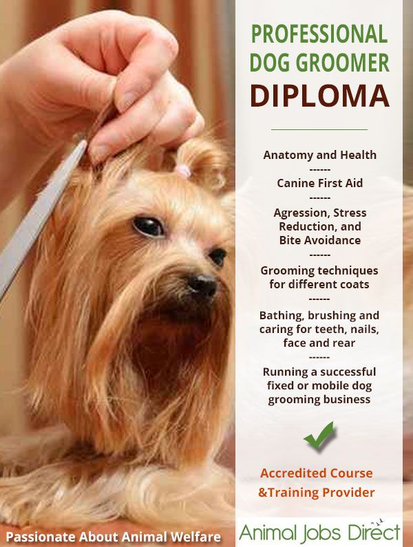 Dog Grooming Course And Diploma Dog Grooming Tips Dog Grooming
