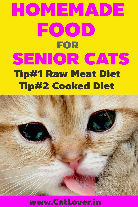 Homemade Cat Food Recipe Homemade cat food, Senior cat