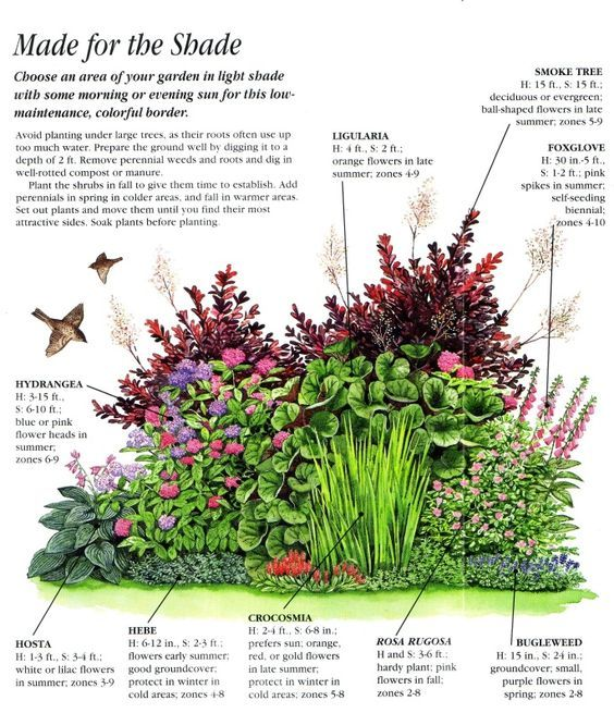 Ideas for an easy care shady border garden design for Easy care landscape design