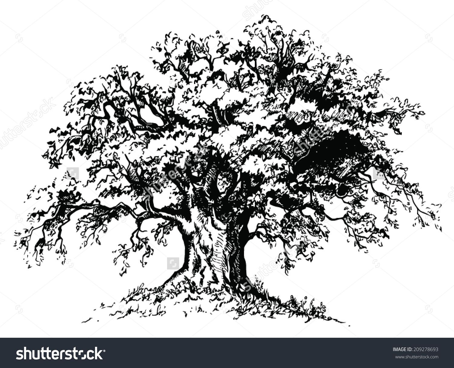Vector old tree isolated black silhouette on white