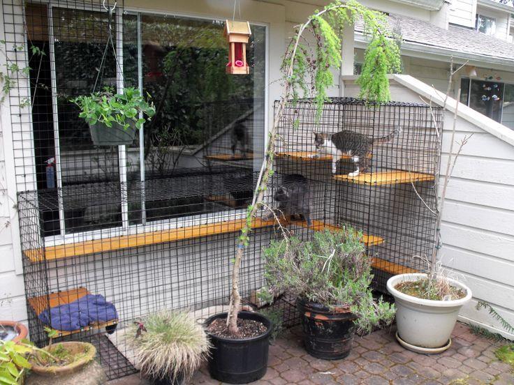 Cat Patio Enclosures   Google Search