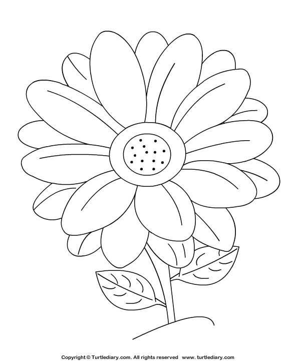 Daisy Coloring Sheet Turtle Diary To do Flower