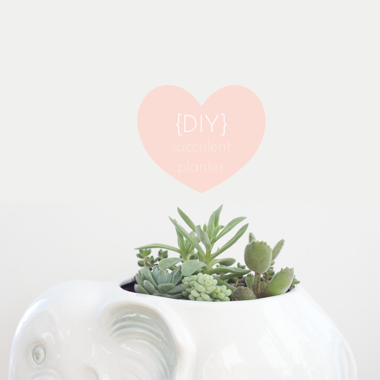{DIY} succulent planter | part //.2 | | ohnorachio!