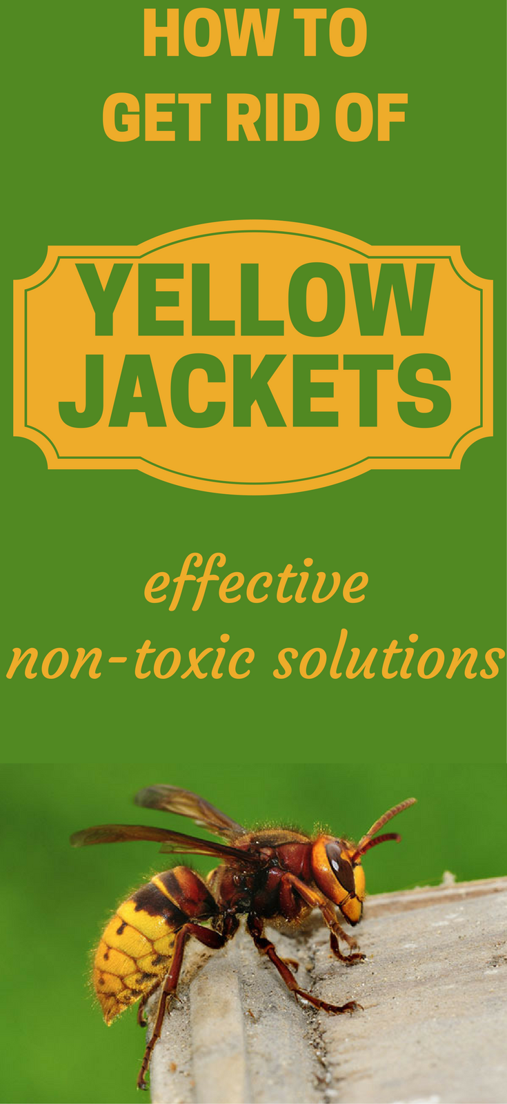 How To Get Rid Of Yellow Jackets Effective Non Toxic Solutions Yellow Jacket How To Get Rid Solutions