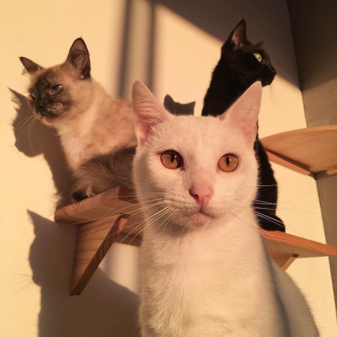 Pin Von Moomew Auf Aesthetic Tiere Wilde Katzen Haustier