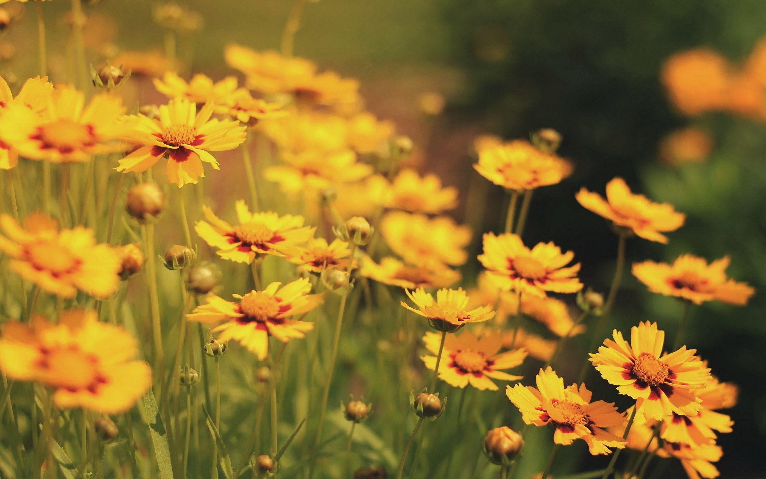 Beautiful flower field background 13407 flower power pinterest beautiful flower field background 13407 mightylinksfo Images