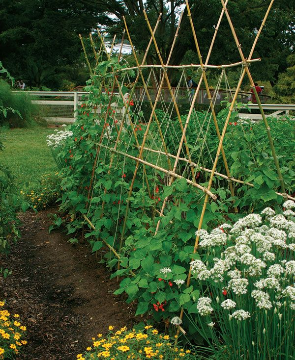 Kitchen Gardens Can Be Beautiful  Trellis