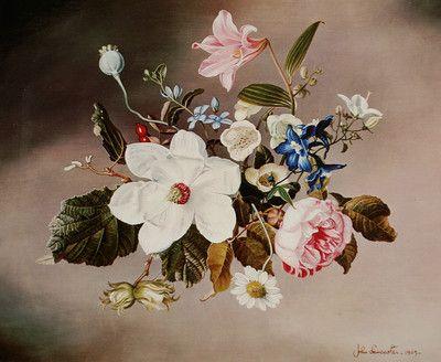 Flowers of Britian by John Lancaster 1965 1968 | eBay